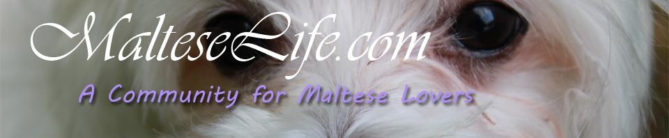MalteseLife.com