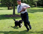 veterinary_whiteHouseDog_0811