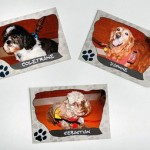 Therapy Dog Trading Cards