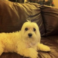 Jake_Morans_Maltese